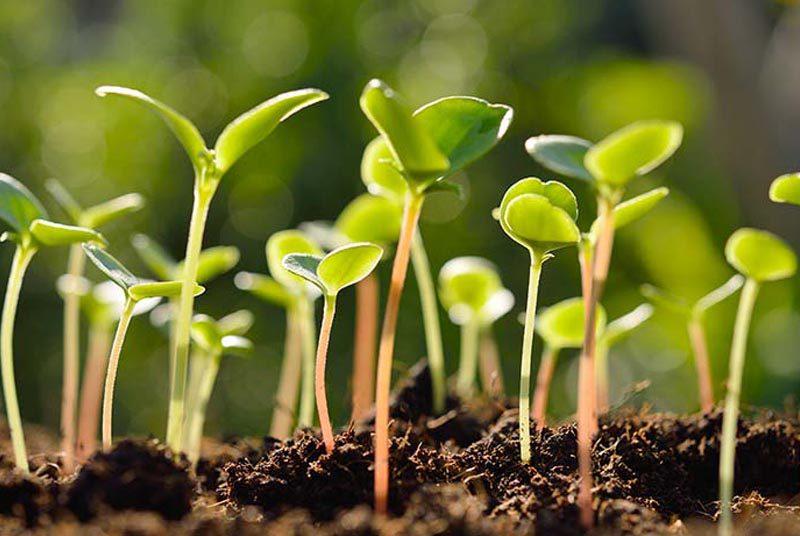 Análisis_para_la_Agricultura_Medio_Ambient